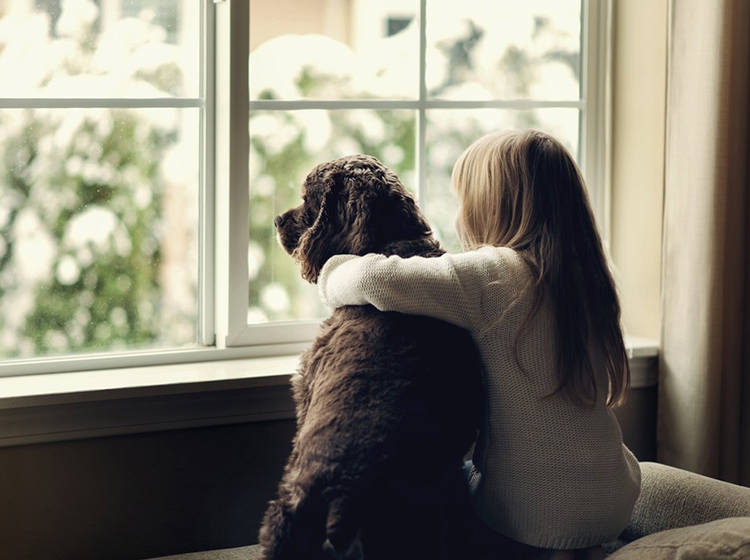o que saber antes de adotar um cachorro? - se o cachorro teve outro dono ele vai gostar de mim