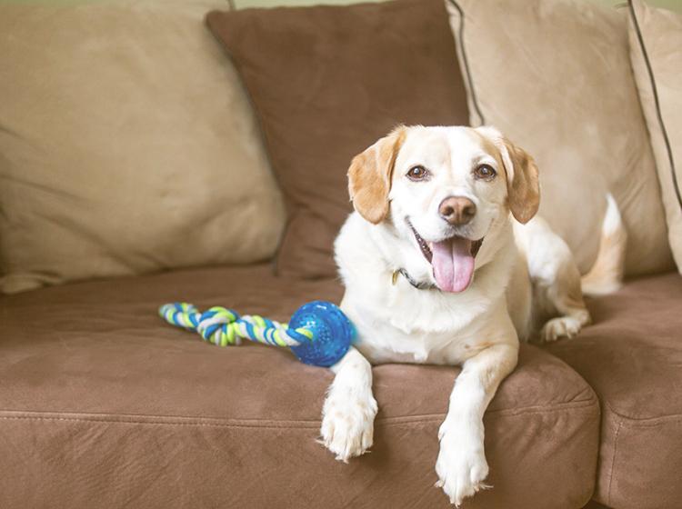 você sabe como deixar o seu cachorro sozinho (e feliz) em casa? - deixe alguns brinquedos para ele se distrair