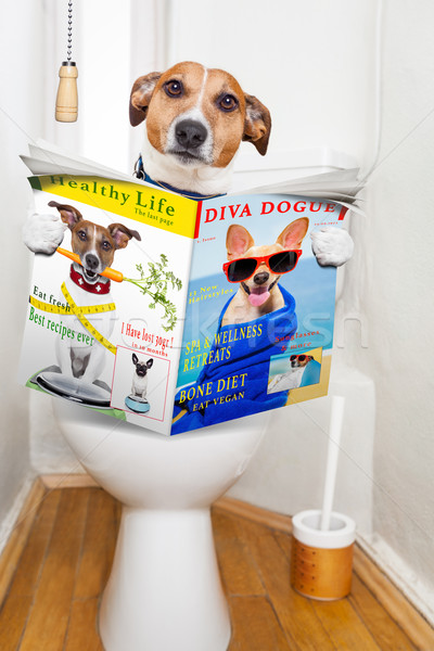 """Cachorro lendo a revista """"Diva Dog"""""""