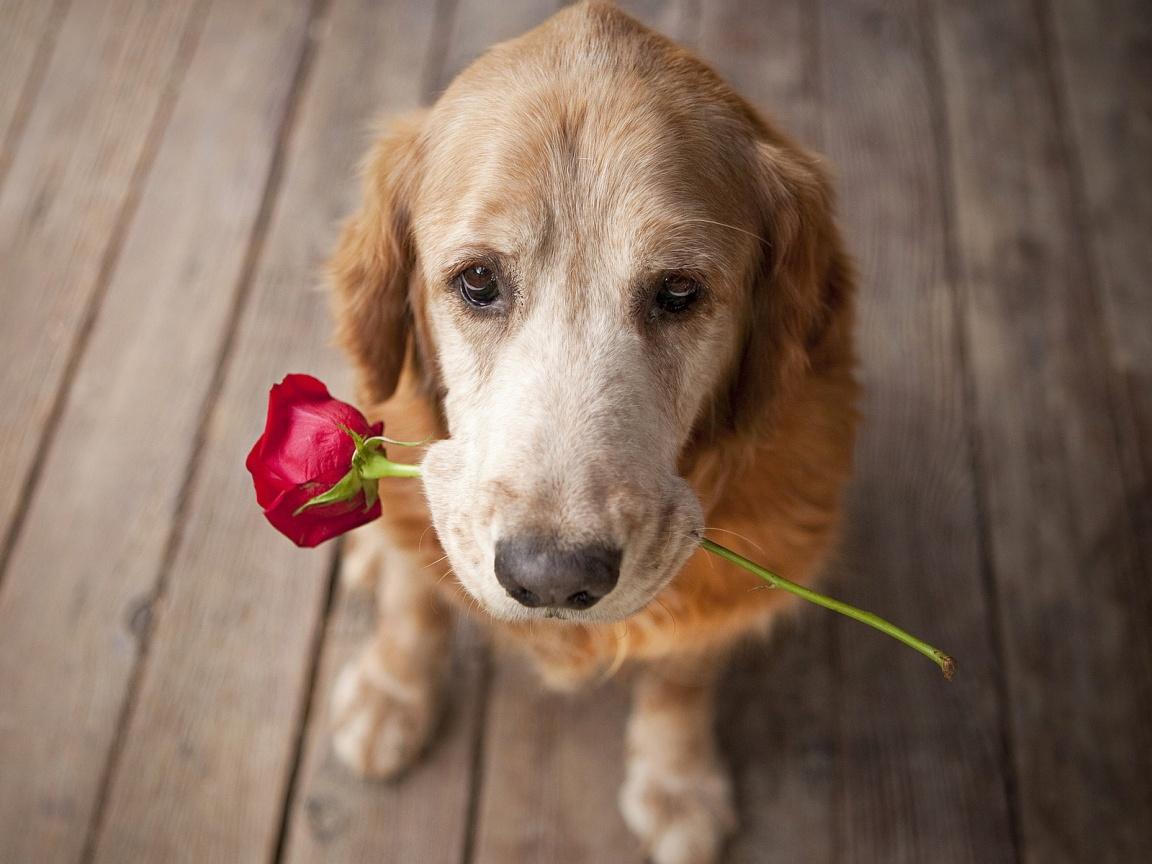 Cachorro oferecendo flor