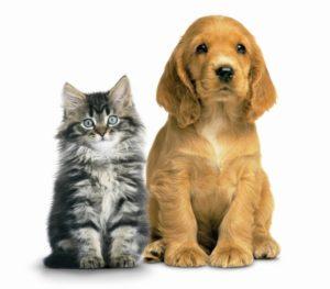 Campanha de vacinação antirrábica chega a Belo Horizonte e Contagem dia 23 de setembro - vacina para cães